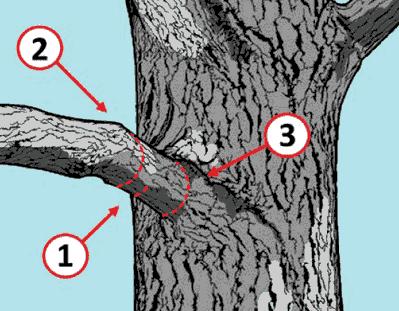 Método ternario de poda