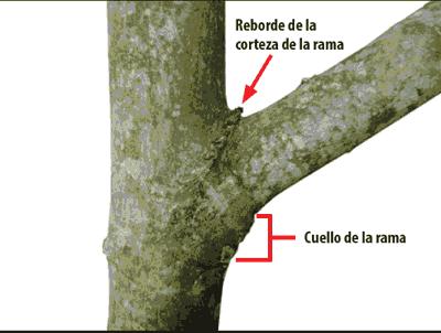 Componentes de la rama