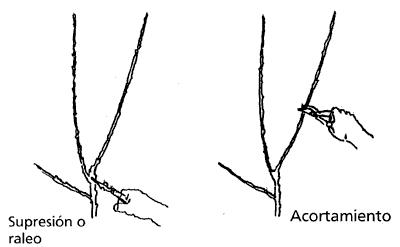Tipos de poda invernal en melocotones