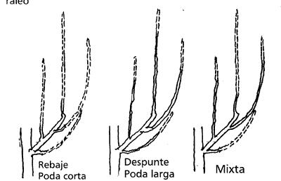Tipos de poda invernal en melocotonero